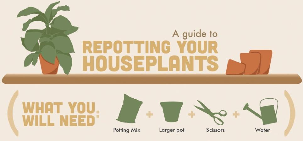 repottinghouseplants