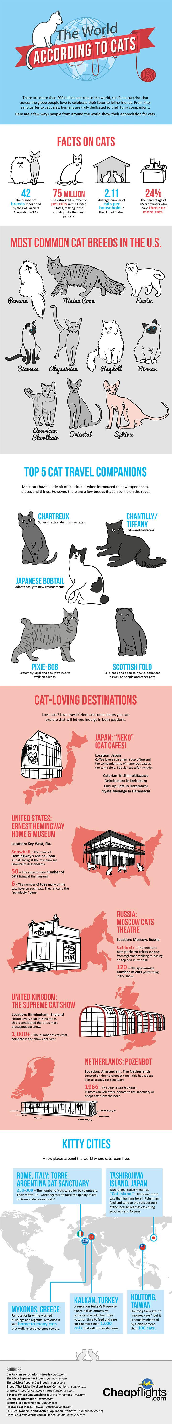 the-world-according-to-cats