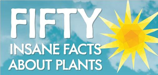 50-facts-about-plants-main