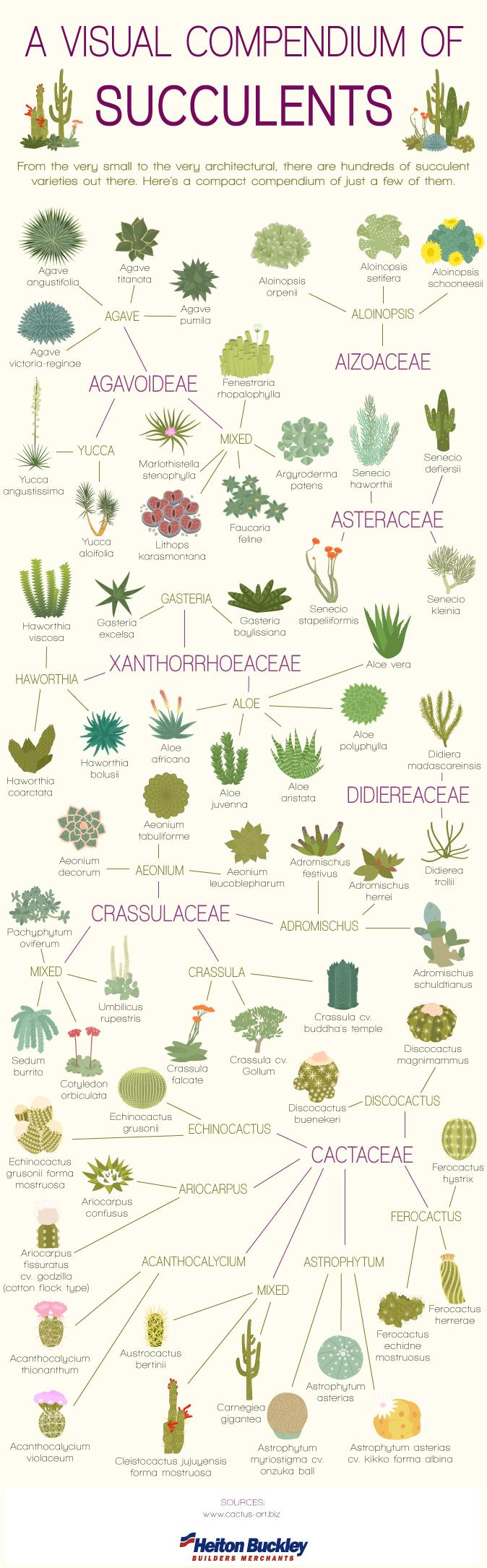 Visual-Comendium-of-Succulents