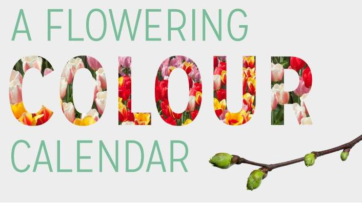 a-flowering-colour-calendar-main