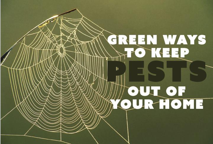 green-ways-to-keep-pests-out-of-your-home Main
