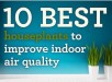10-best-houseplants-to-improve-indoor-air-quality-main