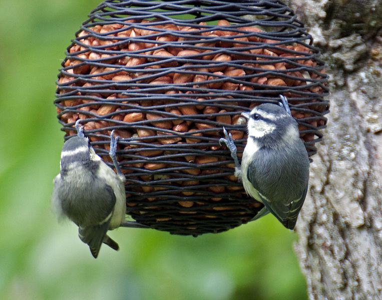 Image result for cool bird feeders